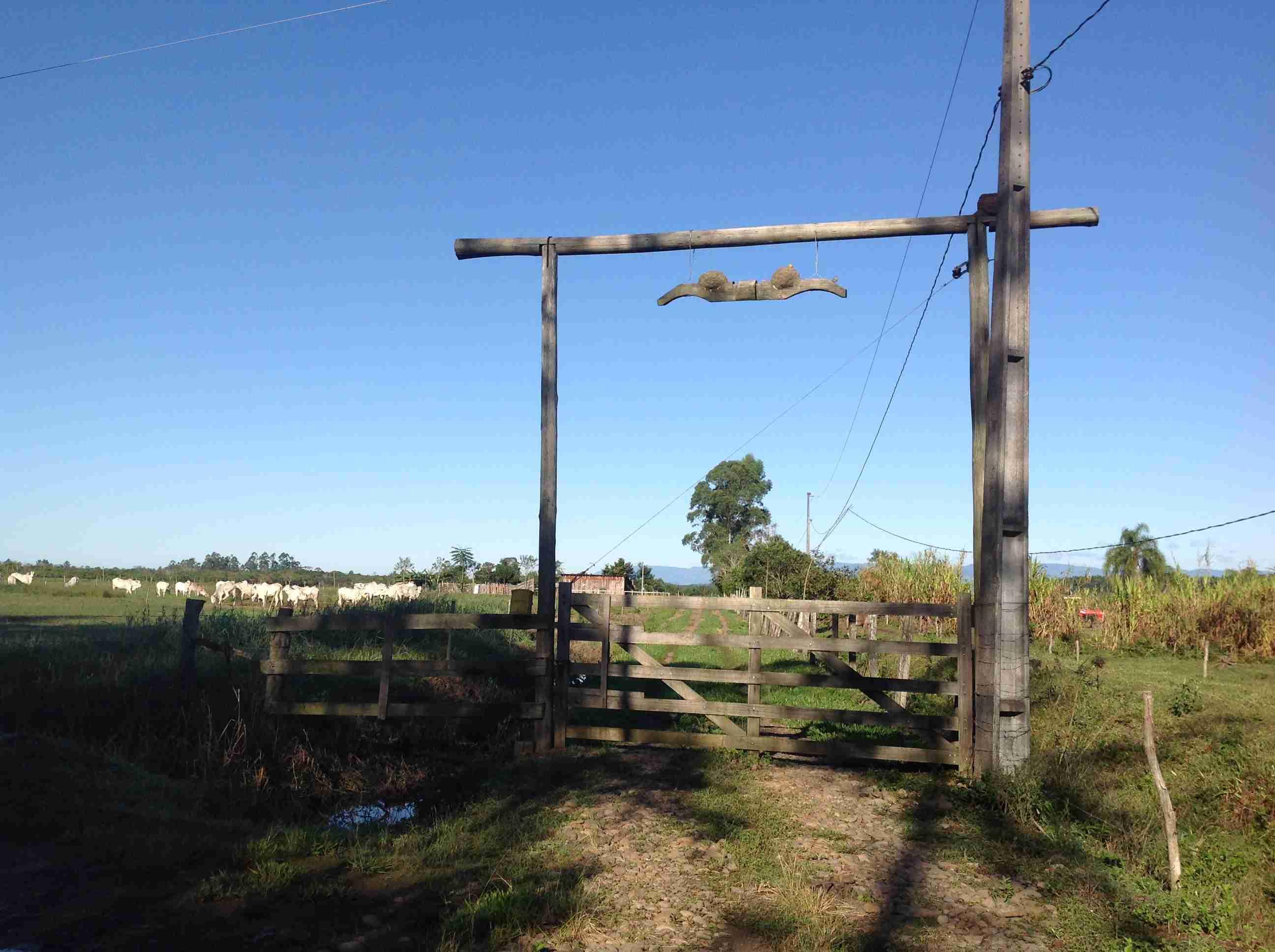 Terreno Rural com pastagem própria O34