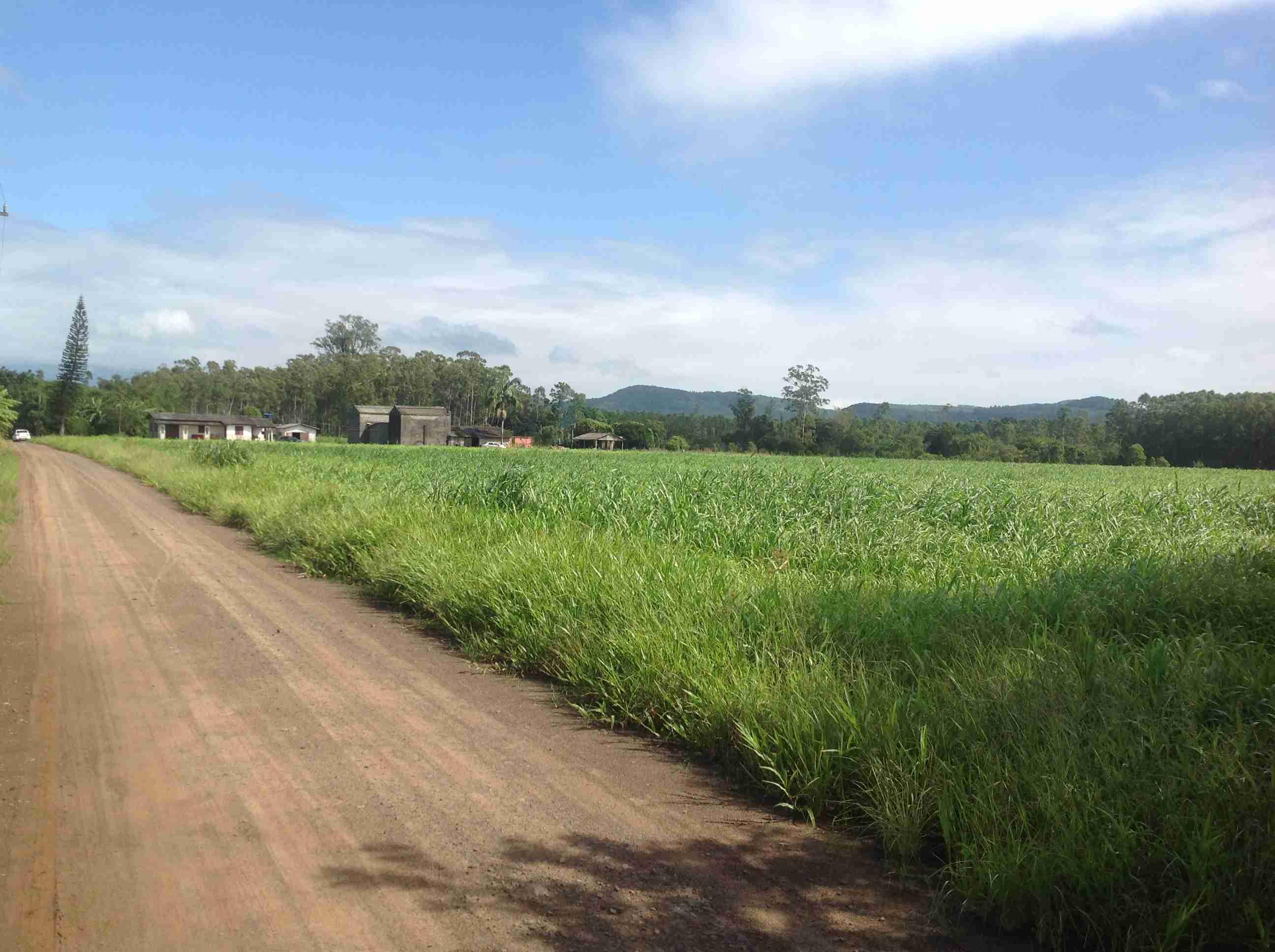 Terreno rural( 080)10,0 há,2 estufas automatizadas, paiol, açude,casa mista,3  quartos,2 banheiros, sala,cosinha,reflorestamento,pastagem.