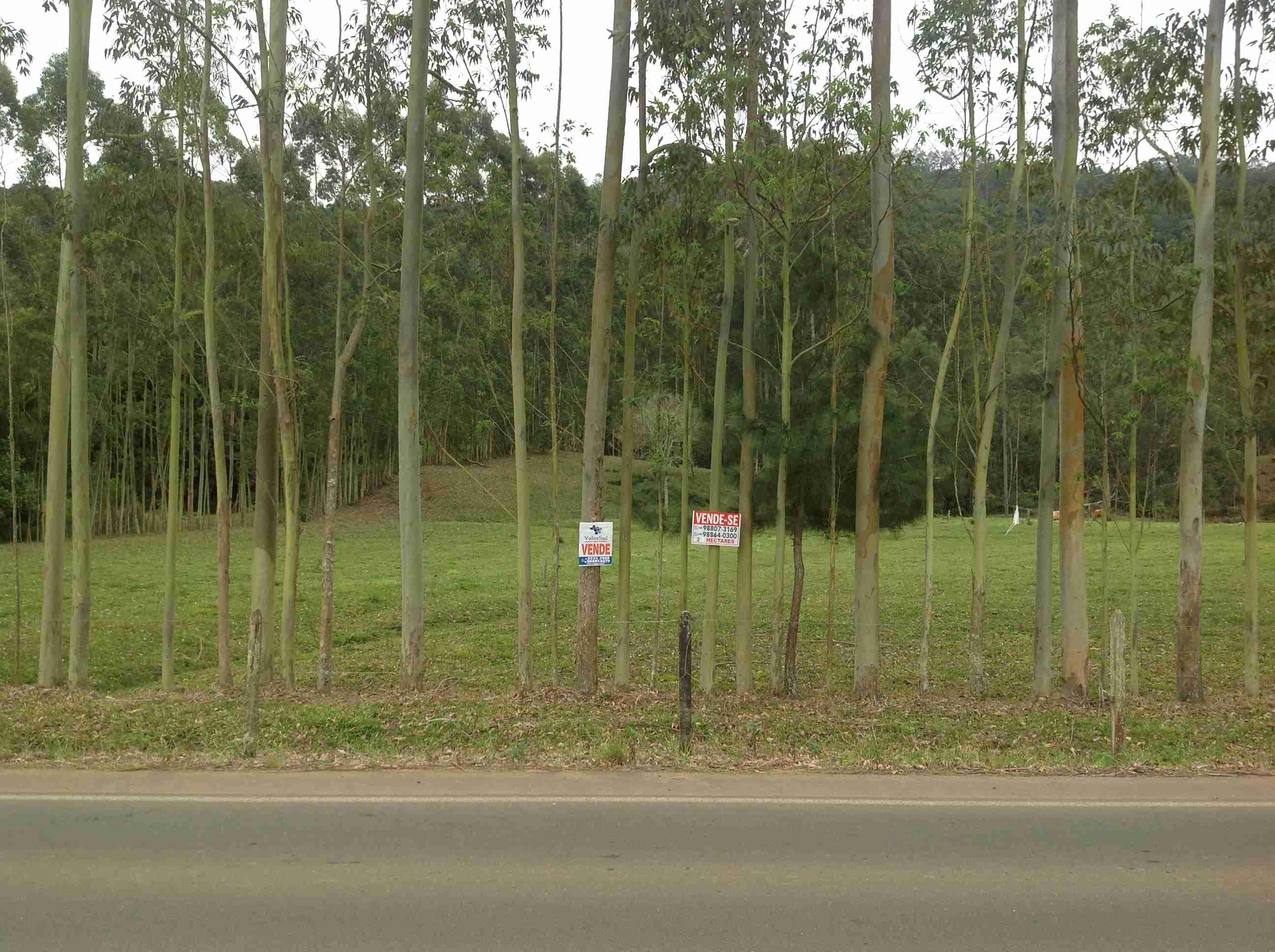 Imóvel (119)Sítio 20.000m2=2,00ha frente p/asfalto estrada geral Vila Nova a 2km centro Santa Rosa do Sul,parte reflorestada c/ eucalípto,fundos bananal,vertente c/ água potável,frente pastagen